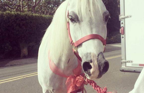 Lady Gaga покинула премию Critics' Choice Awards из-за смерти любимой лошади